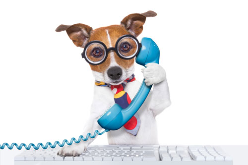 Telephone Dog